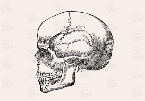 頭蓋骨のイラスト ドクロ スカル ビンテージ クラシック 手描き ペン画