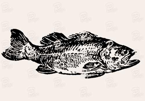 魚のイラスト ビンテージ クラシック 手描き ペン画